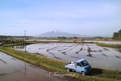 岩木山と水田