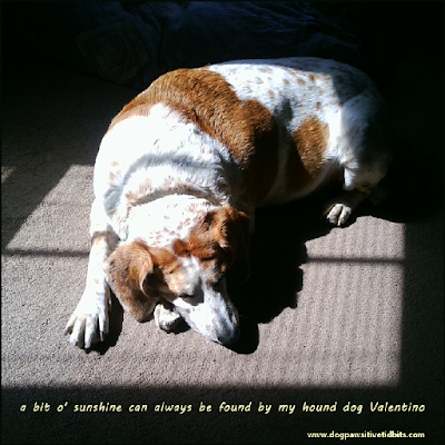Sunshine Found by my Hound Dog