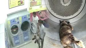 Pemandu Teksi Dipenjara 2 Tahun Bunuh Kucing dalam Mesin Dobi