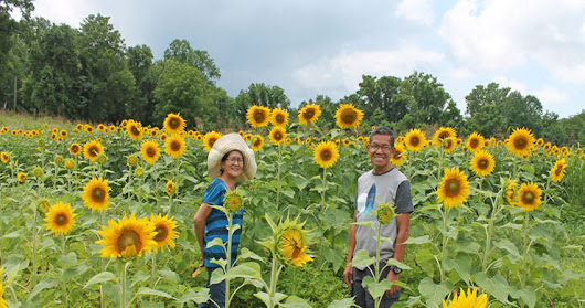 Sunflower Fileds Wildlife to Forks of the River | Parent's Visit America