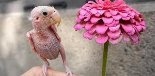 Φαλακρό πουλί κερδίζει τις καρδιές χιλιάδων