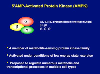 senaman diabetes gula dalam darah 5'AMP