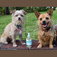 Only Natural Pet EasyDefense Herbal Spray Review