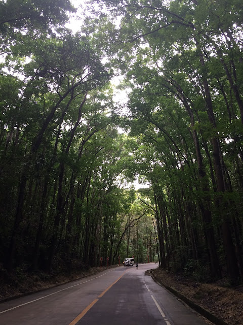 Bohol Mainmade forest