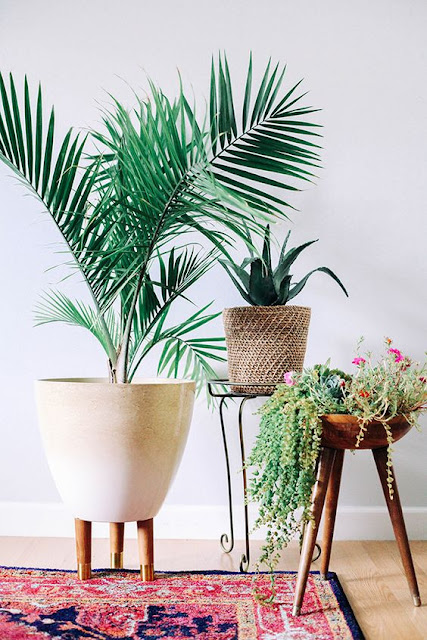 plants- in- support- decoration