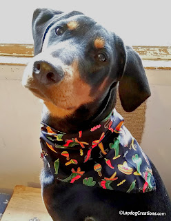 Penny celebrated Cinco de Mayo with her pawesome bandana thanks to #PoochPerks SAVE 10% off your subscription with code LAPDOG #dobermanpuppy #rescuedog #puppylove #LapdogCreations ©LapdogCreations