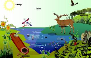 Pengertian Biotik dan Pengertian Abiotik, Contoh Alam Biotik dan Contoh Alam Abiotik