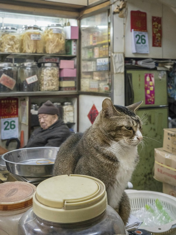 fat cat in hong kong shop