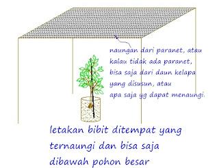 bibit tanaman berkualitas