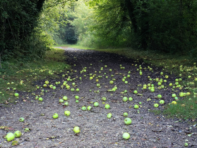 Apples strewn across path
