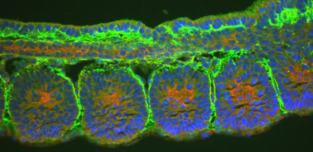 Adhesion celular y biologia