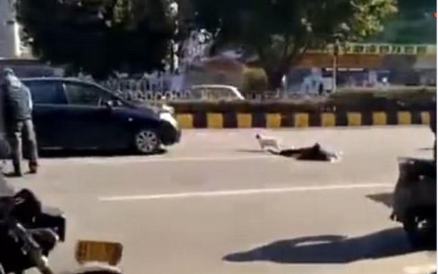 نشر موقع ميل اونلاين مقطع فيديو يظهر كلب وفي لصحابه يقف بجانب جثته بعد وفاته نتيجة حادث تصادم , ويظهر الكلب وهوا يقف بجوار صاحبه المتوفي .