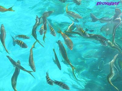 snorkelling pesci colorati Cuba