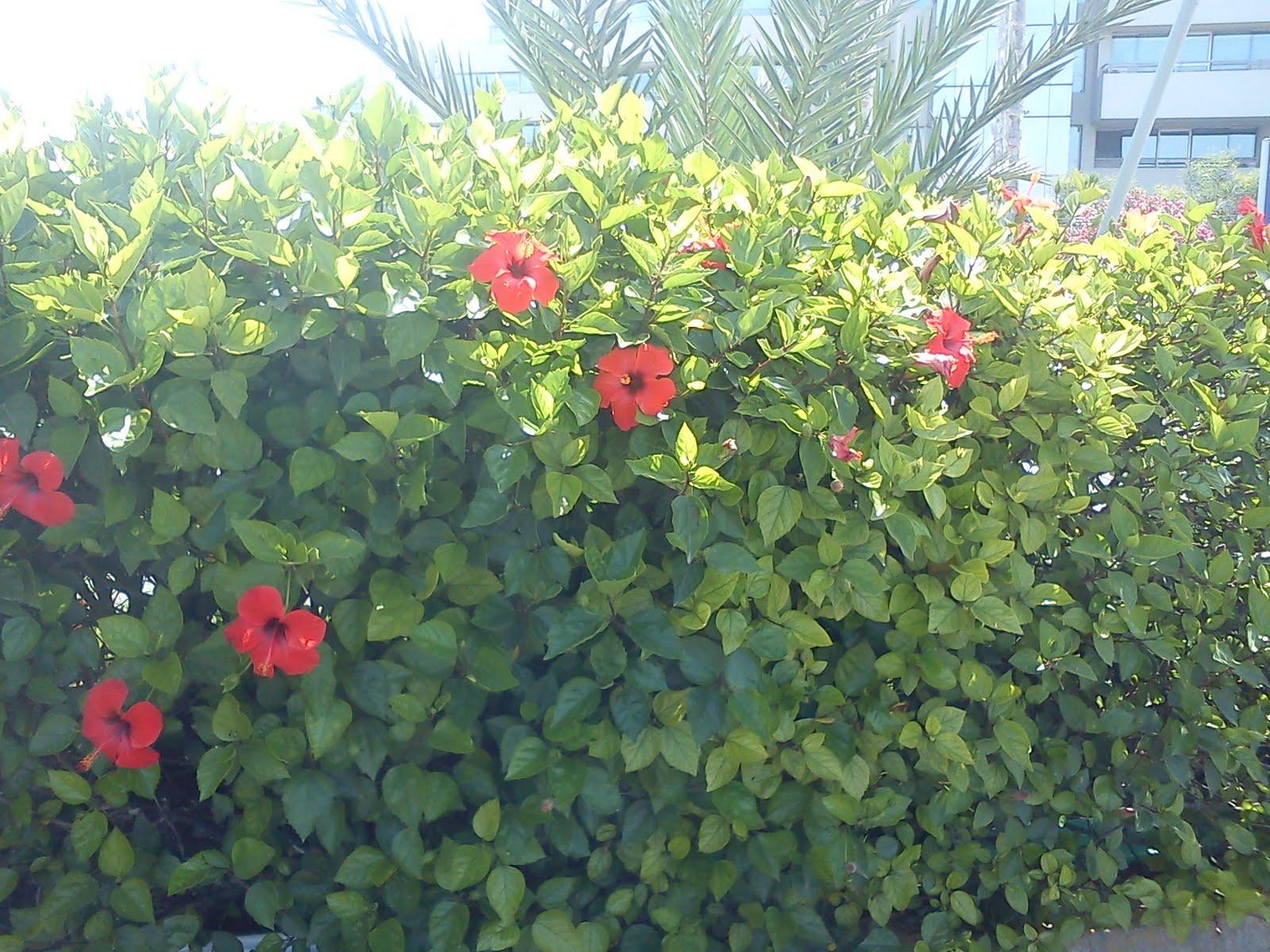 buissons plantes et jardin