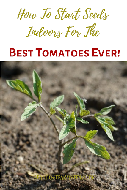 Start your tomato plants from seeds this year.