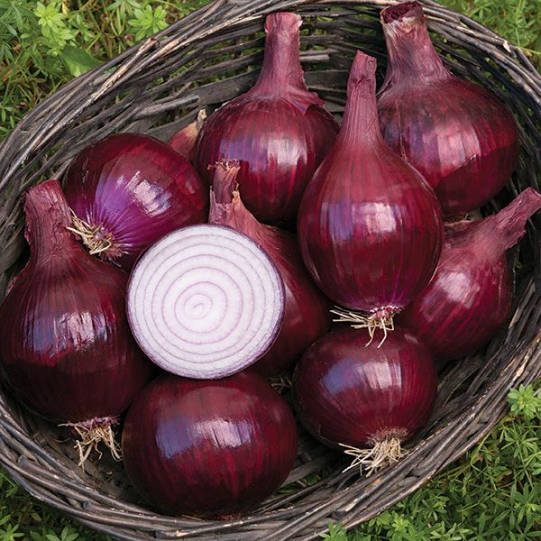 red baron onions