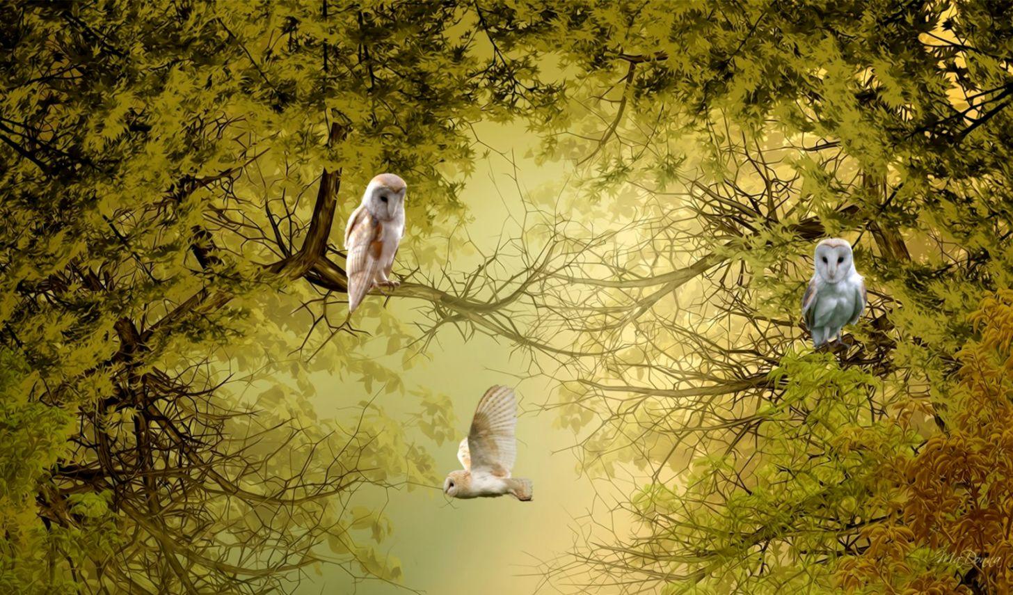 Nature trees birds owls wallpaper 6807 PC en