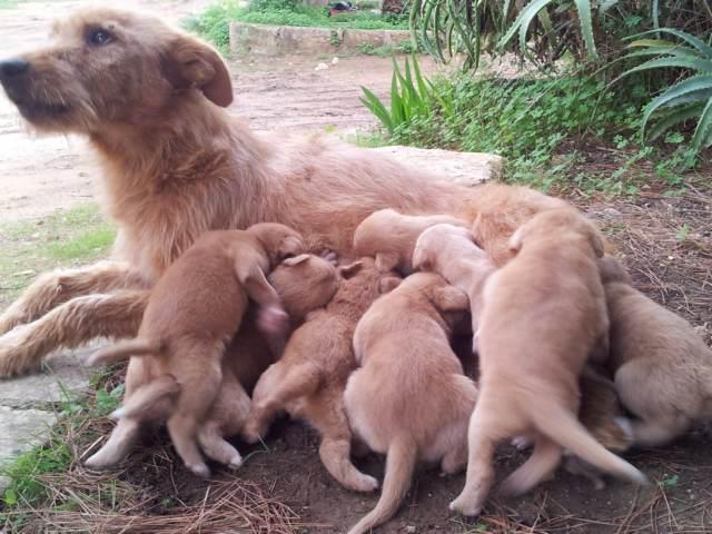 Adotta un cane a Siracusa: Cuccioli taglia piccola di 20 giorni in regalo a Siracusa