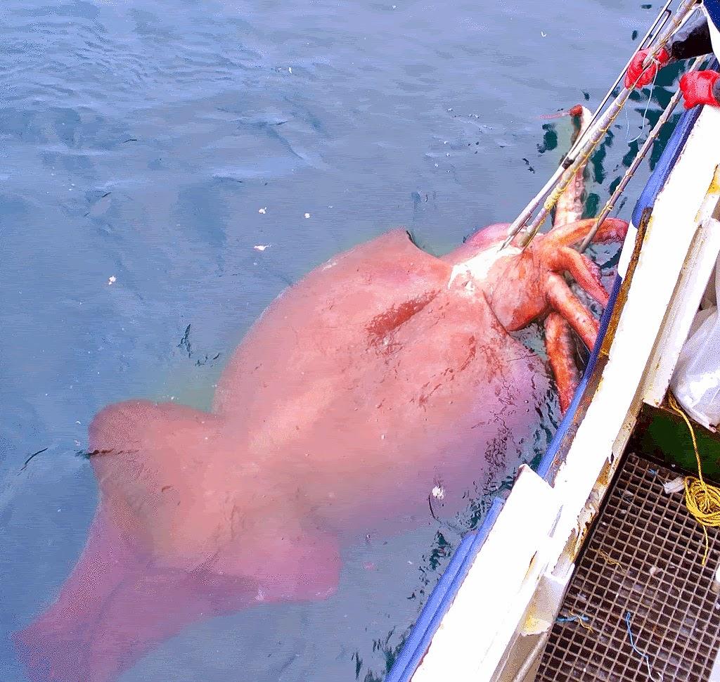 87 Gambar Hewan Laut Terbesar Di Dunia Gratis Terbaik