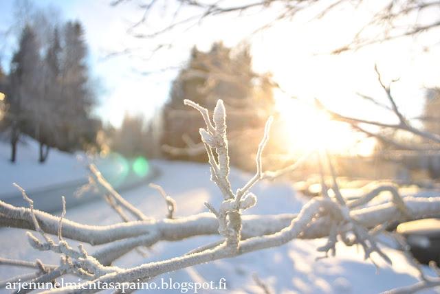 talvi, Kuopio, aurinkoinen, valokuvaus, vastavalo