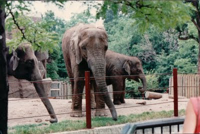 showme elephants the father s photographs lincoln park zoo
