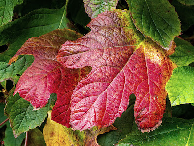 Autumnal tints: Kencho-ji