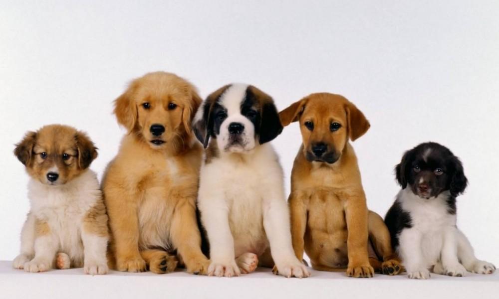 Elige perro adecuado