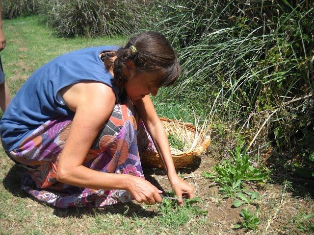 Risultati immagini per raccolta erbe spontanee