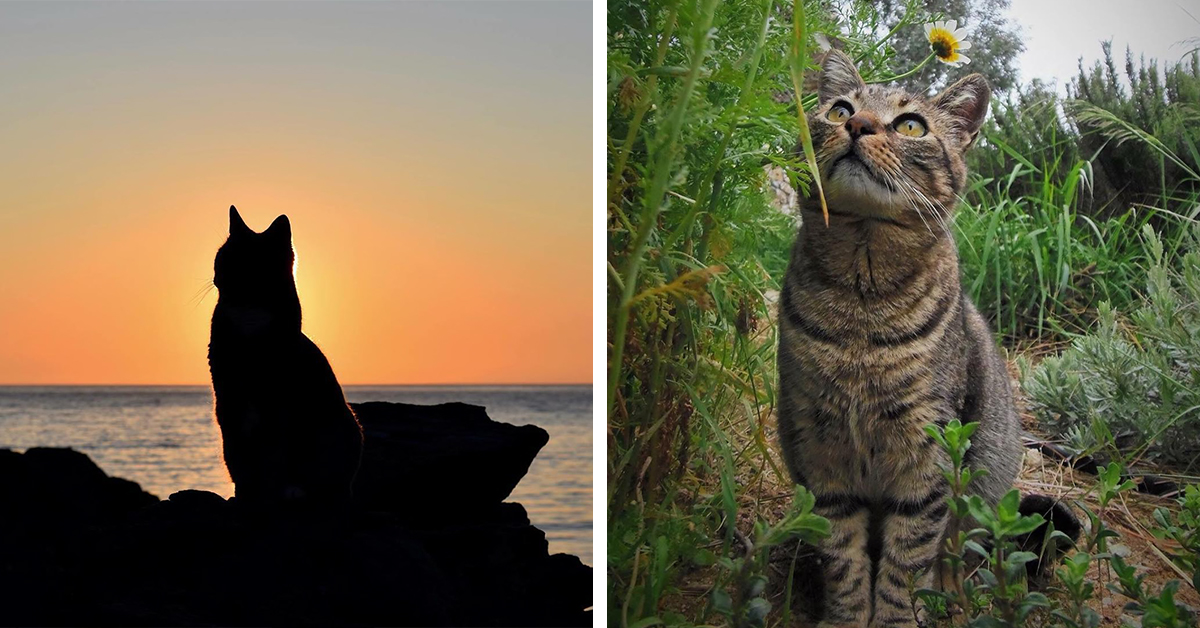 Animal Sanctuary On Greek Island Is Searching For Someone To Look After 55 Cats And Cat Lovers Are Going Crazy