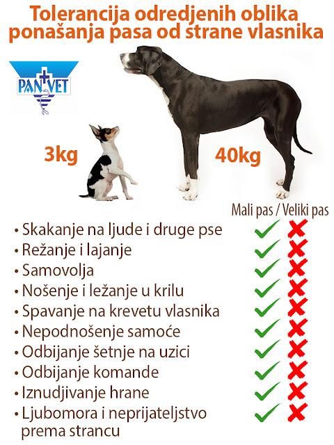 Tolerancija ponašanja kod malih pasa - Panvet Subotica