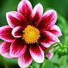 6 Jenis Bunga dan Namanya yang Populer di Indonesia