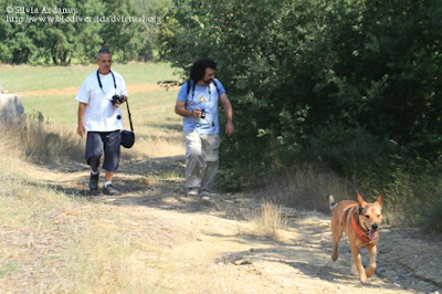 http://www.biodiversidadvirtual.org/insectarium/Pretesting-para-una-excursion-%28Punto-BV-Espacio-Pirineos-de-Graus%29-img506581.html