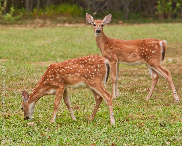 An introduction to the issue of deer hunting in todays society