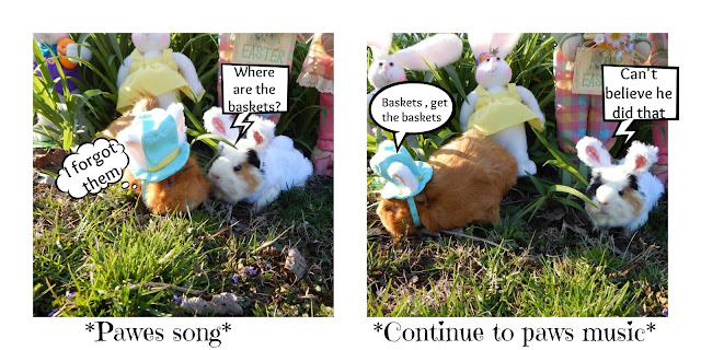 #Cookie and #Cinnamon the #guineapigs in #Easter Post -CarmaPoodale.com