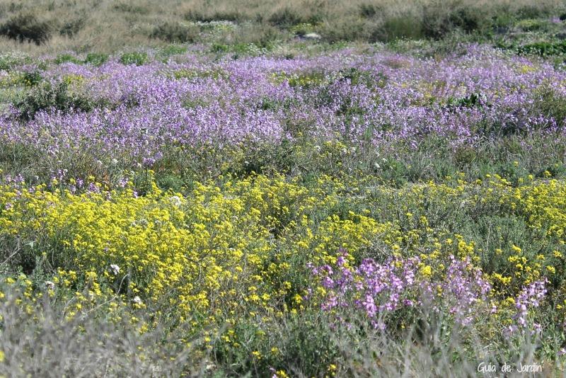 El campo coloreado por las flores silvestres
