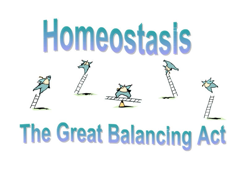 125 Summary Of Homeostasis And Co on Parts Of A Plant Ppt