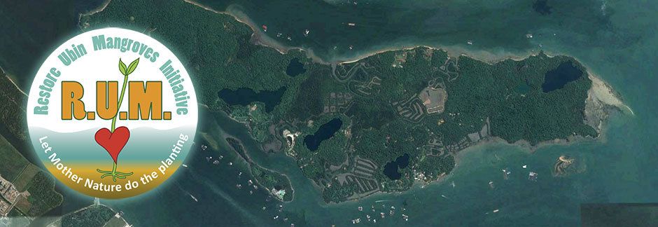 Restore Ubin Mangroves (R.U.M.) Initiative
