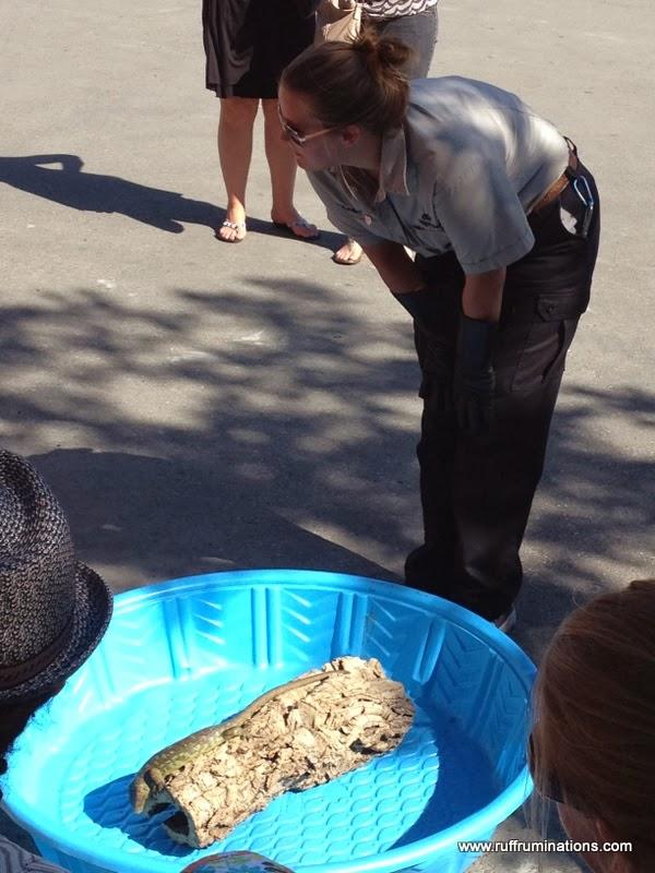 Ruff Ruminations Five Must Have Camping Beach Toys: Ruff Ruminations: Calgary Zoo Summer Camp