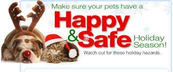 Live Learn Compounding Pharmacy Holiday Pet Safety