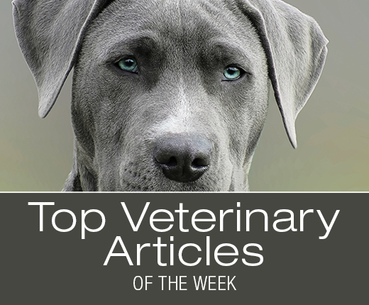 Top Veterinary Articles of the Week: Disposal of Your Dog's Meds, Mastitis, and more ...