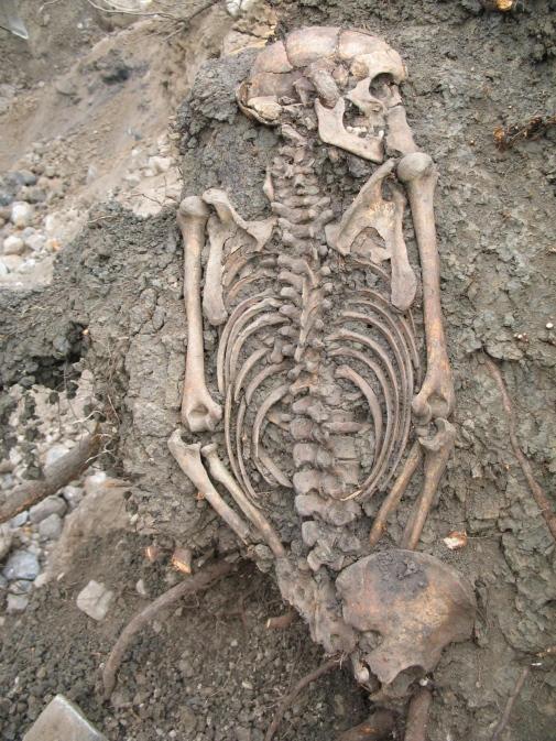 Genetic study reveals half of Viking city of Sigtuna were immigrants