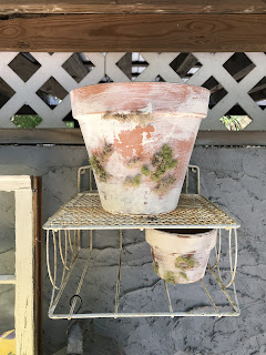 Moss adds an additional element to the new clay pots.