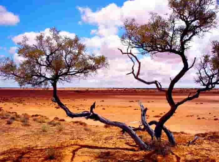 Η έρημος Simpson