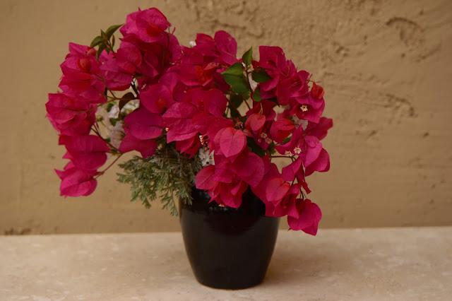 monday vase, small sunny garden, desert garden, bougainvillea, lantana, amy myers, photography, ceramics, stoneware, pottery