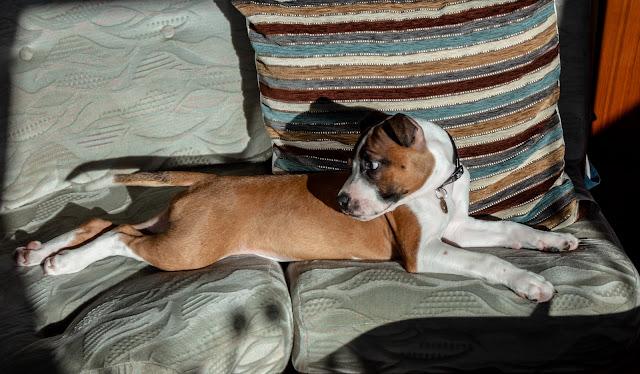 Photo of Ruby sunbathing in Ravensdale's saloon