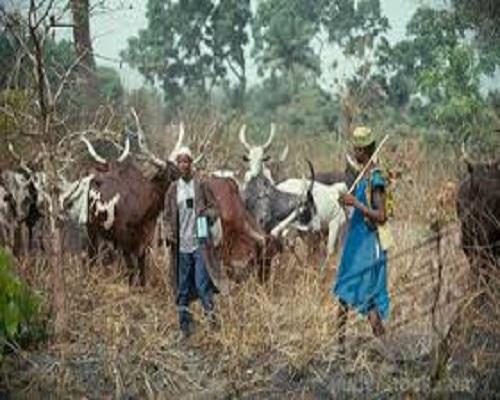 Herdsmen killings: British government responds to London protest