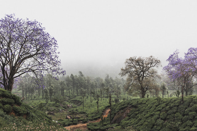 India Marlon Krieger Travel Kerela 4