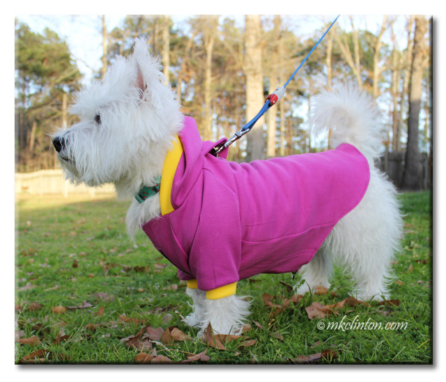 White West Highland Terrier wearing purple PrideBites hoodie