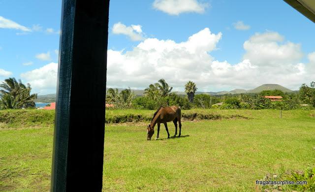 cavalo pastando em frente à minha varanda no Tupa Hotel, Ilha de Páscoa