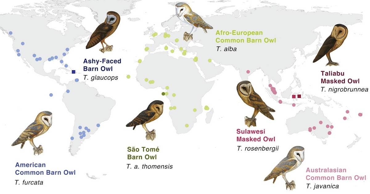 Species New to Science: [Ornithology • 2018] Comprehensive ... - photo#50